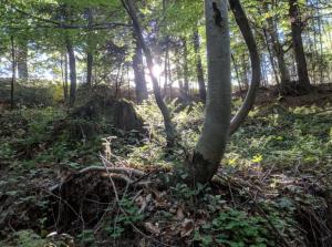Wald Sonne blitzt durch